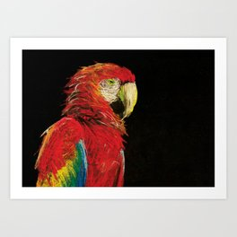 Scarlet Macaw Portrait Art Print