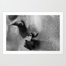 Hungry Monkey Art Print