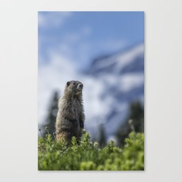 Marmot Checking Out His Neighborhood at Mount Rainier, No. 3 Canvas Print