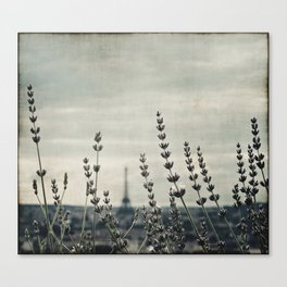 French lavender ~ Paris Canvas Print