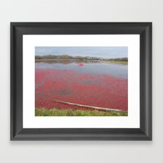 Cranberries Waiting To Be Rounded Up Framed Art Print
