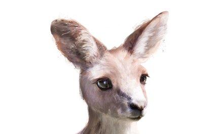 Art Print - Little Kangaroo - Amy Hamilton
