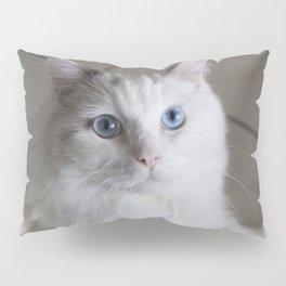 Ragdoll Cat Blue Eyes Pillow Sham