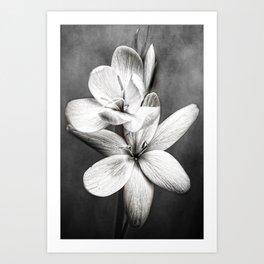 Quiet Beauty  Art Print