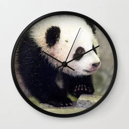 Extremely Cute Little Baby Panda First Steps Ultra HD Wall Clock