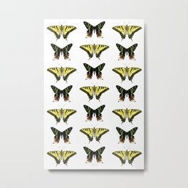 Butterflies & Moths Metal Print