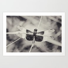 Dragonfly II mono Art Print
