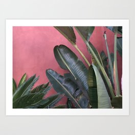 Palm On Pink Art Print