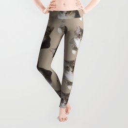 beige tan grey american wirehair cat pattern Leggings