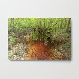 Turkey Creek, South Carolina Metal Print