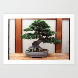 Bonsai Tree Art Print