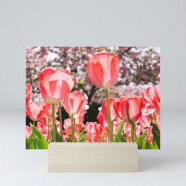 Pink Tulips and Cherry Blossoms in New York City Spring Mini Art Print