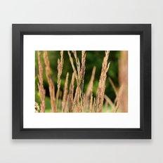 Praire Framed Art Print