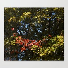 The Leaves Were Smiling at Me, and I Didn't Even Know Canvas Print