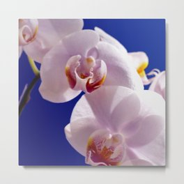 Orchid on Blue #2  Metal Print