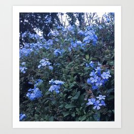 Pretty In Periwinkle Art Print