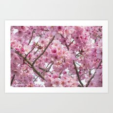 Cherry Blossoms in spring Art Print