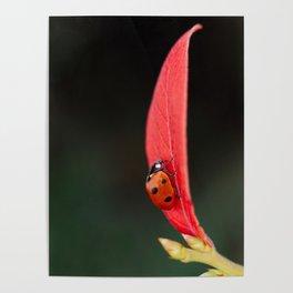 Ladybug On An Autumn Leaf Poster