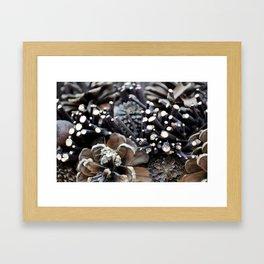 Pinecones Framed Art Print