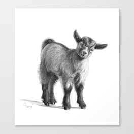 Goat baby G097 Canvas Print