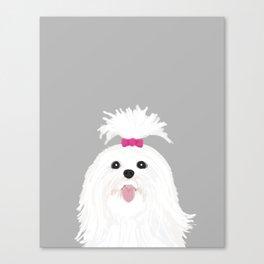 Pima - Shih Tzu cute white funny dog art customizable gift for dog person dog lovers pet art Canvas Print
