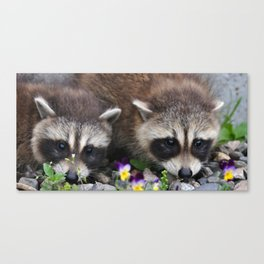 Raccoon Brothers Canvas Print