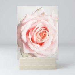 Light Pink Pink Rose Mini Art Print