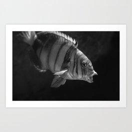Clown Fish (Black and White) Art Print