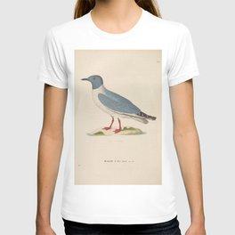 larus melanorhinchus3 T-shirt