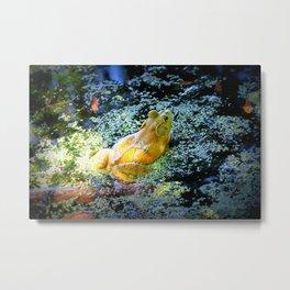 Bullfrog In The Swamp Metal Print