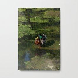 Duck's portrait Metal Print