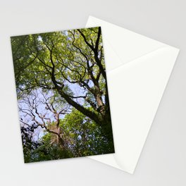 Tree Branches Stationery Cards
