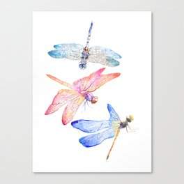 Colorful Dragonflies Canvas Print