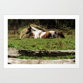 Paint By Nature Horse Photo Art Print