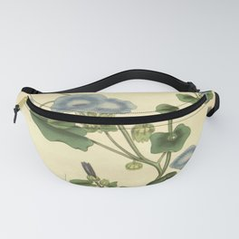 Flower physalis prostrata Trailing Winter cherry Fanny Pack