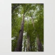 Forest in the Sky Canvas Print