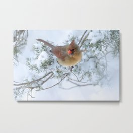 Drifting (Northern Cardinal) Metal Print