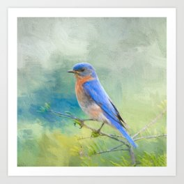 Bluebird In The Garden Art Print