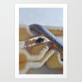 Clip Spider Art Print