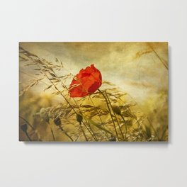 Summer Field with Poppy Metal Print
