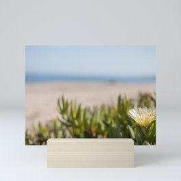 Blooming succulent ground cover on Californian beach Mini Art Print