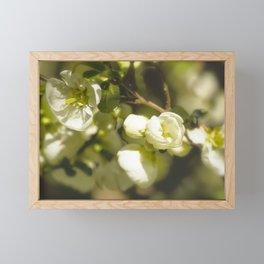 White Quince Framed Mini Art Print