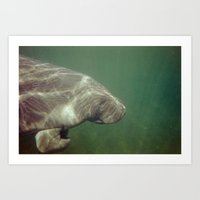 manatee Art Prints featuring Manatee by Twilight Wolf