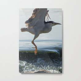 Black-Crowned Night Heron 2 Metal Print