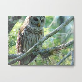 Owl Perching on a Branch Metal Print