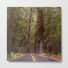 Humboldt Redwoods State Park, Avenue of the Giants, California Photography, Woodland Forest Art Home Decor Metal Print