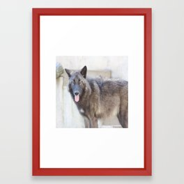 Handsome and his pink tongue Framed Art Print