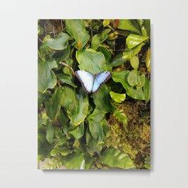 Blue Morpho Metal Print
