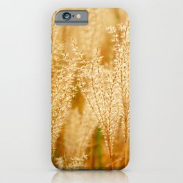 Close-up of a tall grass at sunrise iPhone Case