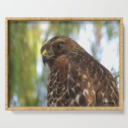 Young Red-Shouldered Hawk in a Desert Willow Serving Tray